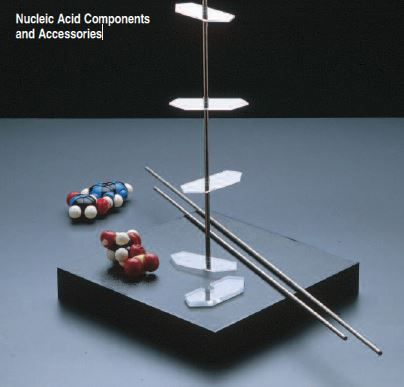 CPK Atomic Models, Nucleic Acid Helix Assembly Components