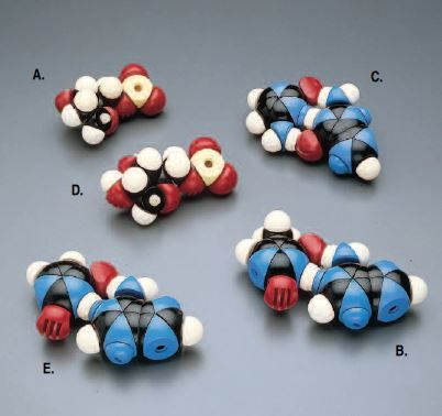 CPK Atomic Models Nucleic Acid Helix Components